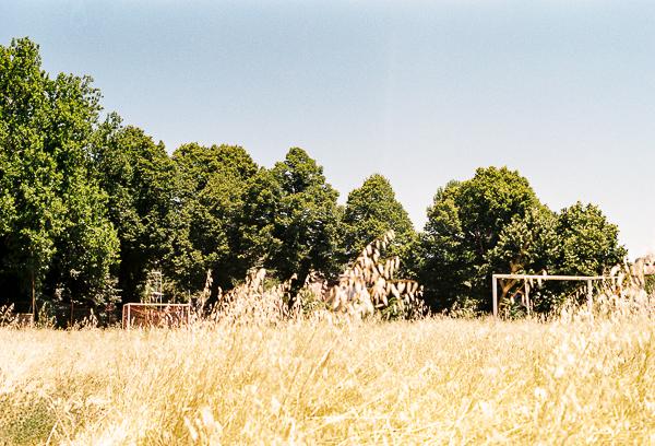 Corn field film photography | Minolta SRT100X
